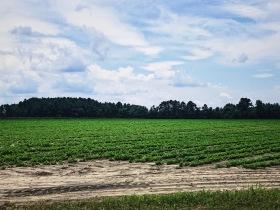 Farmlands - Estill, S.C.