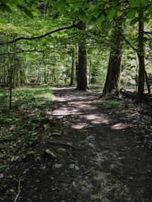 Wildflower Preserve - Ithaca, NY